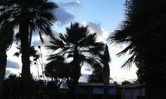 Buongiorno e buon inizio settimana! #Numanablu #nofilter #alba #sunrise #salidadelsol #nuvole #clouds #palme #bungalow #controluce #sagome #numanablucampingvillage #family #camping #resort #Numana #Conero #ConeroRiviera #rivieraconero #destinazioneconero #destinazionemarche #igersancona #igersmarche