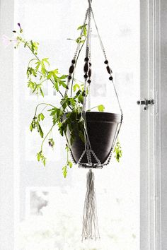 Växt kruka fönster Möregatan