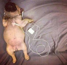 Listen the music//Bullgie