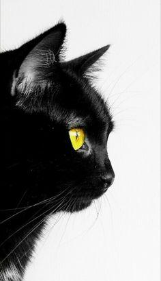 Crazy Cat Lady, Crazy Cats, I Love Cats, Cool Cats, Cat Spirit Animal, Wallpaper Gatos, Black Cat Aesthetic, Black Cat Art, Cat Drawing