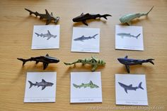 compare contrast essay sharks dolphins