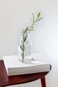 Fresh and simple. Perfect for any modern design and a little green home decoration.
