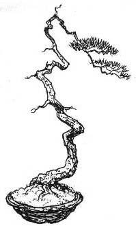 Styl Bunjin. Jest to styl bardzo trudny do opisania. Wyrafinowaną formę drzew uzyskuje się odrzucając wszystkie zasady sztuki bonsai stosowane w innych stylach. Reguła jest formowanie rzadkich gałązek powyżej 2/3 wysokości drzewa. Inspiracją dla tego stylu były drzewa przedstawione na obrazach twórców południowej szkoły chińskiego malarstwa pejzażowego, nazywanej Nanga.  BONSAI - Sztuka miniaturyzacji drzew i krzewów