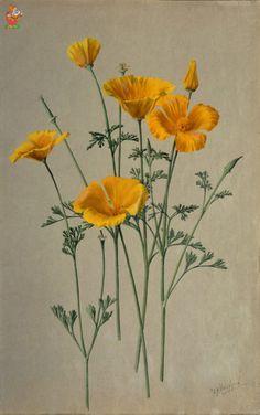 (90) - Немного ботаники -