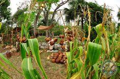 Rescatando herencias y tradiciones: Comunidades participan en la  Travesía Sagrada Maya