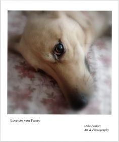 Art Photography, Dogs, Animals, Fine Art Photography, Animales, Animaux, Pet Dogs, Doggies, Animal