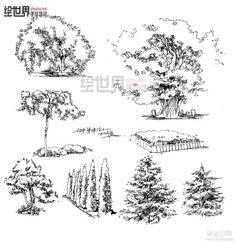 景观植物单体手绘 线稿和马克笔 - 景观...