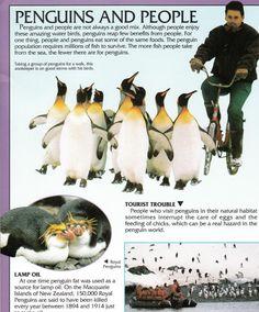 Penguin Facts | Penguin Place Penguin Facts, Penguins, Survival, Birds, Places, Animals, Animales, Animaux, Penguin