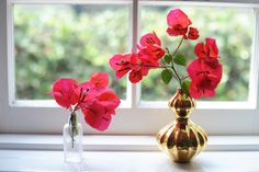 Cut bougainvillea is an awesome and lovely alternative to a bouquet of flowers