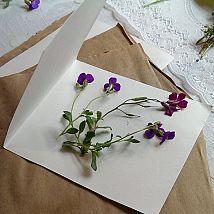 Hometalk: DIY Tutorial: Microwave Flower Pressing