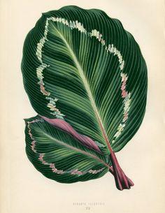Free Tropical Leaves Printable