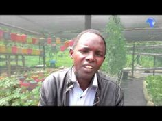 Peter Chege: Farmer reaping big from hydroponics in Kenya - YouTube. He says it uses about 80% less water.
