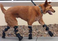 Bionic Paws!