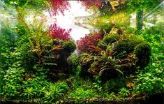 Planted Tank happy journey by Adil chaouki - Aquascape Awards