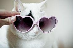 45 Cats Wearing Glasses  {}  I heart my glasses.