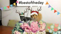 Que lindos gatitos son Terry y ronrroneo