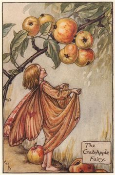 FLOWER FAIRIES/BOTANICALS: The Crab-Apple Fairy; This is an original vintage Cicely Mary Barker Flower fairies colour print. It is not a modern reproduction, c1935; approximate size 11.0 x 7.5cm, 4.5 x 2.75 inches