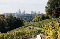 Weinreben auf dem Lohrberg mit Blick auf die Skyline von Frankfurt. Mehr dazu unter http://www.vicampo.de/weinbilder/landschaften/im-weinberg/galerie/page/10