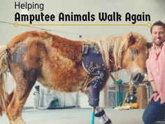 From a miniature pony to goats, and dogs to elephants, Derrick Campana fashions prosthetics to help animals walk again.