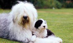 Best Dog Breeds For Children | 10awesome.com