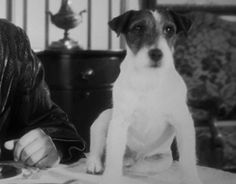 """If dogs could win Oscars, Uggie would be a shoo-in for Best Supporting Actor for """"The Artist""""."""
