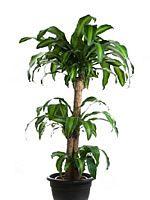 Indoor Plant Hire Melbourne   Pot N Plant   Indoor Plants   Interior Plantscaping   Australia