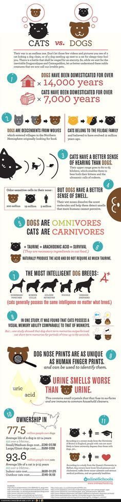 Cats vs. Dogs, the war is on! Are you a cat person or a dog person? Find out the differences between cats and dogs, as well as, the difference between the dog people vs. cat people. #infographic