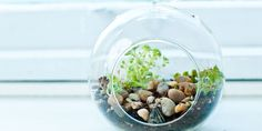 Your Ultimate Guide to Terrariums: How to Design and Care for Them