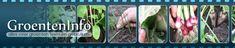 Groenten zaaien en planten in juli en augustus