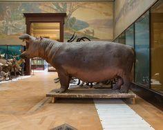 Museum voor Midden Afrika - Tervuren - Belgium