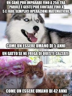 How smart are dogs and cats Crazy Funny Pictures, Funny Pictures Can't Stop Laughing, Funny Animal Pictures, Funny Images, Funny Photos, Funny Video Memes, Funny Relatable Memes, Haha Funny, Funny Jokes