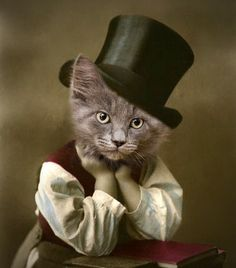 Clothed Cats : D. Booker Cat in Clothes Vintage Cat Print Cat in Tophat Anthropomorphic Whimsical Cat Art Unique Cat Art Funny Cat Cat Cards I Love Cats, Crazy Cats, Cool Cats, Funny Cats, Funny Animals, Cute Animals, Clever Animals, Unique Cats, Cat Cards