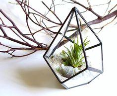 """Tener plantas en la casa le da vida y energía a nuestro espacio. Muchas veces las macetas no terminan de verse bonitas o no sabemos realmente qué tipo de plantas son las más fáciles """"de cuidar"""". Meni Cebreros nos muestra en un bonito video de YouTube cómo hacer nuestro terrario en casa, el cual…"""