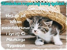 Good Day, Crochet Hats, Cats, Animals, Author, Buen Dia, Knitting Hats, Good Morning, Gatos