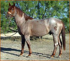 http://www.horsecrazygirls.com/images/red-21267962.jpg