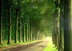 Green, quiet places