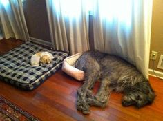 These dogs switched beds. | 35 Magical Moments Captured With A Camera