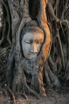 Tree growing around statuary
