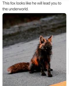 He's a fox, a trixter. Chances are, he'll lead you to heaven just to spite you Funny Animal Jokes, Cute Funny Animals, Funny Animal Pictures, Funny Cute, Cute Dogs, Shark Pictures, Beautiful Creatures, Animals Beautiful, Animals Amazing