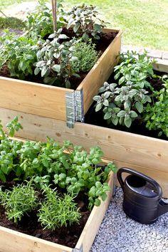 P Garden, Market Garden, Garden Spaces, Dream Garden, Vegetable Garden, Garden Plants, Outdoor Plants, Outdoor Gardens, Plantar