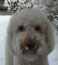 Curly loves the snow.