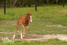 Learn more about foal education and training at http://www.horseeducation.com