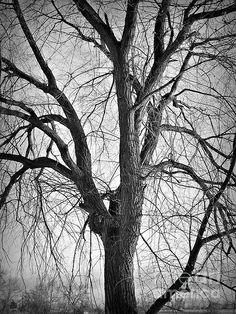 Title:  Barren   Artist:  Chalet Roome-Rigdon   Medium:  Photograph - Photography