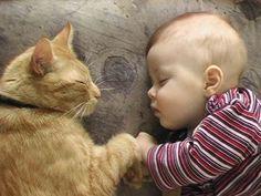 Soñando con las aventuras del otro. | 38 fotos que prueban que los gatos tienen un corazón de oro