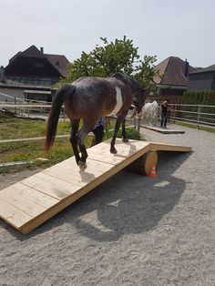 In the summer and autumn of 2018 we offer in # 3237 Br # # # # # # # # # Im Sommer und Herbst 2018 bieten wir in 3237 Br t - Art Of Equitation Extreme Trail, Paddock Trail, Trail Riding Horses, Cross Country Jumps, Types Of Horses, Horse Training, Horse Farms, Horseback Riding, Challenge