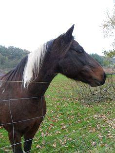 Z Pardubického kraje, kolem 50 let Horses, Animals, Cat Breeds, Animales, Animaux, Animais, Horse, Words, Animal