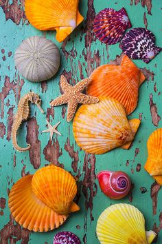 Shells On Old Green Board is a photograph by Garry Gay which was uploaded on June The photograph may be purchased as wall art, home decor, appare Seashell Painting, Seashell Art, Starfish, Cute Wallpapers, Wallpaper Backgrounds, Iphone Wallpaper, Summer Wallpaper, Shell Beach, Beach Themes