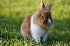 #coniglio Cosa diamo da mangiare al coniglio? http://www.paniar.it/blog/alimentazione-del-coniglio-gli-errori-da-evitare/