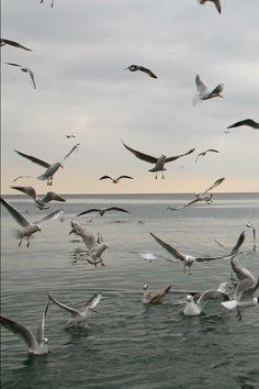 AB Beautiful Birds, Beautiful Places, Bosphorus Bridge, Sky Sea, Billy Joel, Sea Birds, Birds In Flight, Natural Beauty, Painting