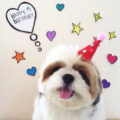 Used Happy Birthday Happy Birthday Dog, Birthday Cheers, Birthday Blessings, Best Birthday Wishes, Happy Birthday Quotes, Birthday Thank You, Happy Birthday Images, Birthday Pictures, Birthday Greetings For Facebook